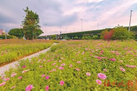 """花海公园将进入修整期 赏花另有好去处:南二环出""""彩"""" 南江滨藏""""娇"""""""