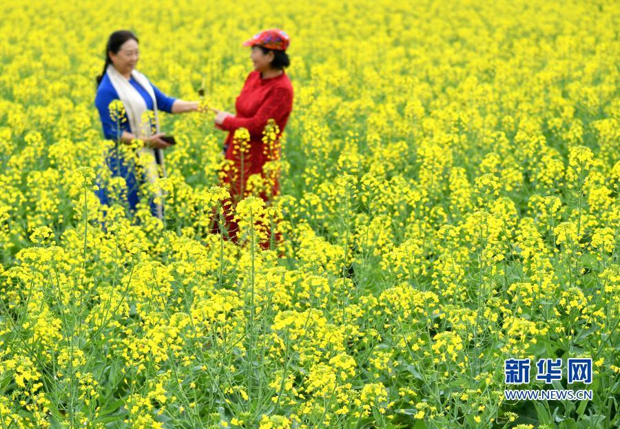 福州:油菜花开春光美