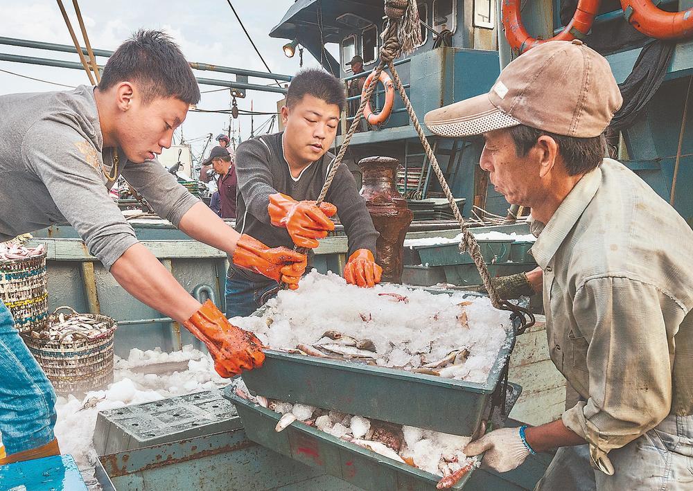 霞浦:渔满欢